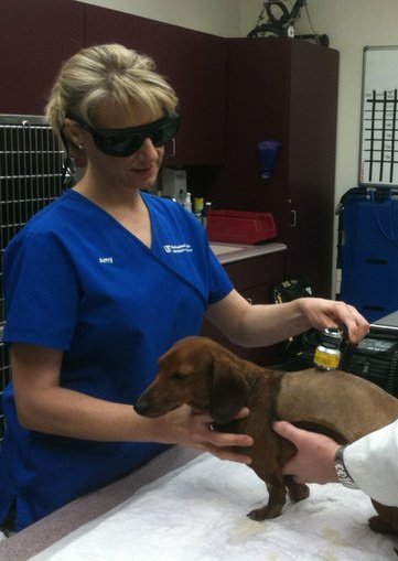 Balasinor hospital paralysis in dogs