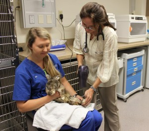 Zoological medicine technician Pia Orejo, left, and junior veterinary student Erica Bernard with rabbit.