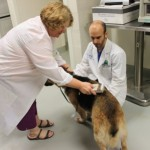 Kathy Reger scans for microchip with Dr. Brian DiGangi