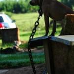 Dog fighting rescue scene.