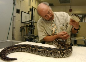 Dr. Elliott Jacobson with boa