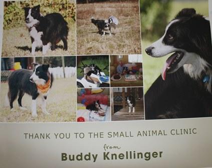 Buddy Knellinger poster
