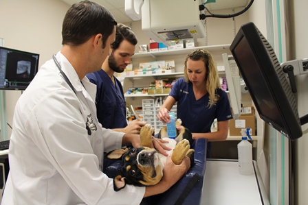 Veterinary student Andrew Morgan assists with an ultrasound at Trenton Animal Hospital.