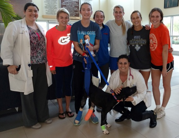 Dr. Katie Barry, left, and third-year UF veterinary student Jessica ? are shown with Calvin, a dog owned by twin sisters Lauren and Brooke Smith, third and fourth from left, on Dec. 2, the day of Calvin's discharge from the UF Small Animal Hospital. (Photo by Sarah Carey)