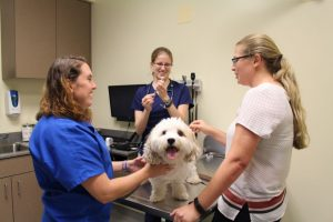 Canine flu vaccination clinic