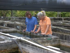Dr. Francis-Floyd at aquaculture facility