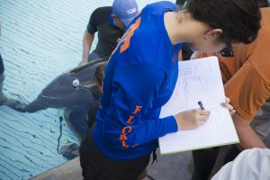 Dr. Megan Strobel records information from a hearing test being conducted on a dolphin. (Photo courtesy of SeaWorld of Florida)