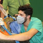 Crocodile surgery
