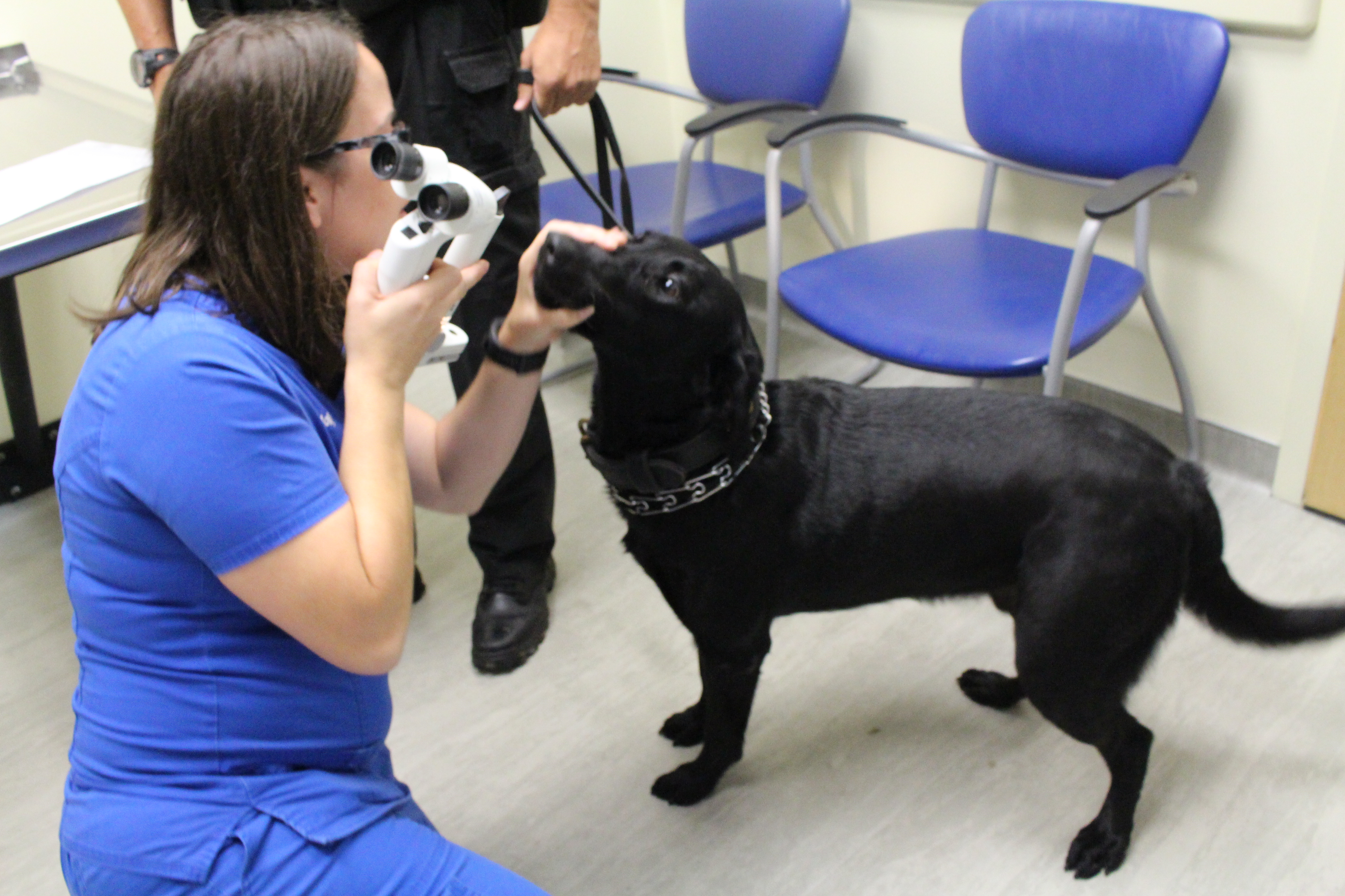 Holly Kitchen examines a K9's eyes during the national service dog eye and heart event in 2016.