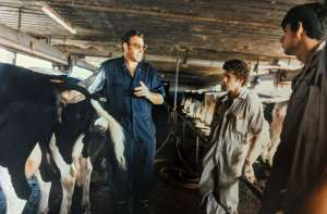 Dr. Braun performs a procedure on a cow, teaching students.