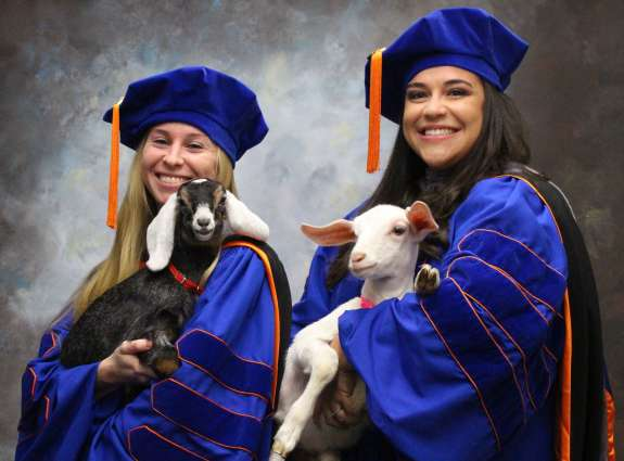 Students in regalia with goats