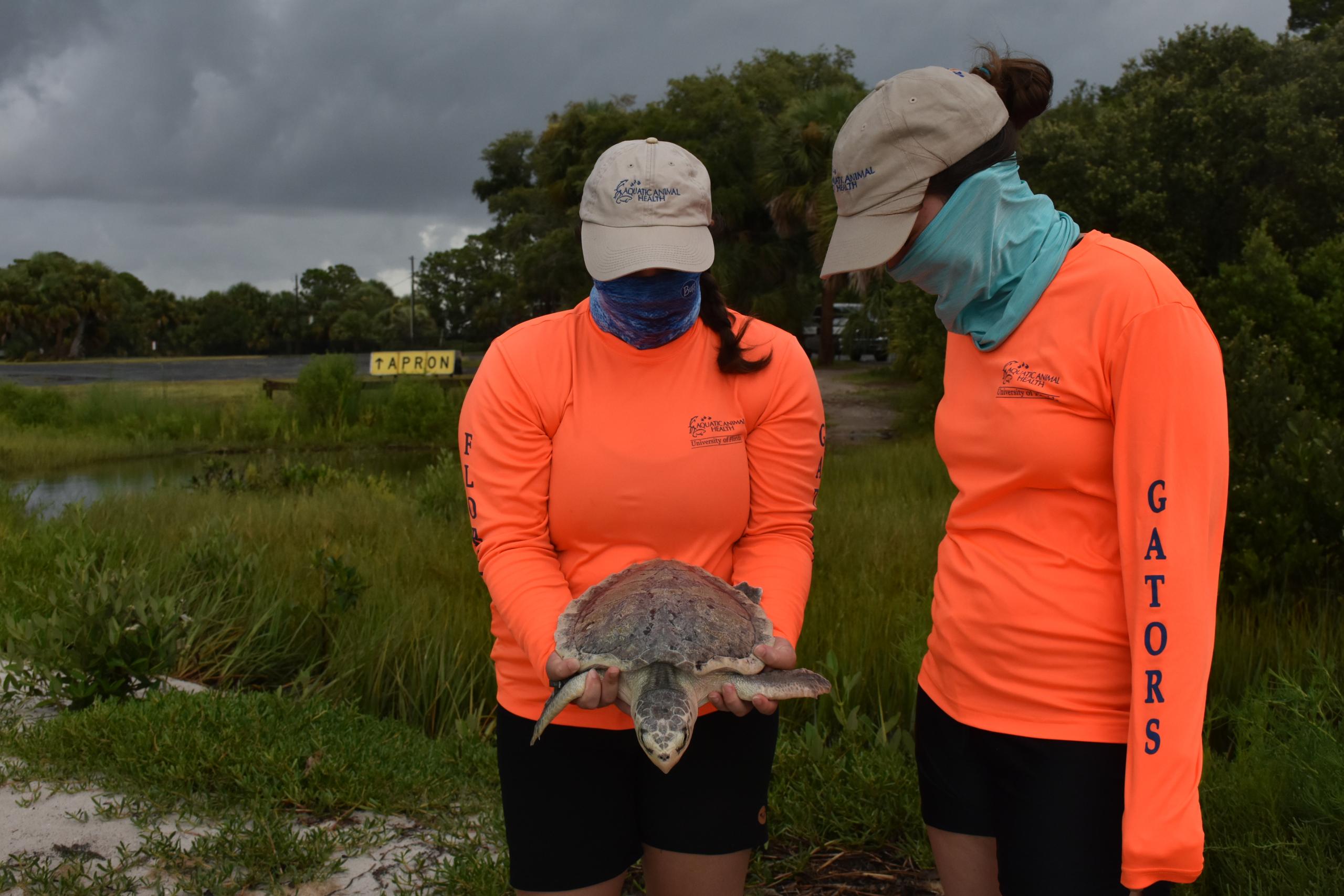 Sea turtle in Cedar Key